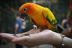 Exotic Pet & Bird Consultations